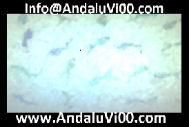 www.AndaluVi00.com